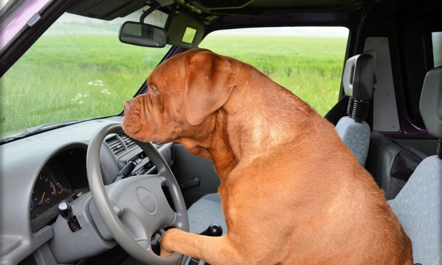За рулём странного автомобиля обнаружили пса.